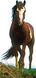Mustang Horse Cardboard Cutout Standup Prop